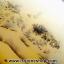 เดนไดทริก อาเกต Dendritic Agateขัดมันจากมาดากัสการ์ (149g) thumbnail 4
