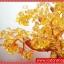▽ต้มไม้มงคลซิทริน Citrine เหรียญจีนทอง (size L) thumbnail 4