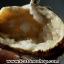▽ต้นไม้มงคล หินควอตซ์ใส (Clear Quartz) -ฐานควอตซ์ ใช้เสริมฮวงจุ้ย โต๊ะทำงาน (330g) thumbnail 2