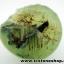 ▽พรีไนท์ (Prehnite)ธรรมชาติ ประเทศมาลี (12.1g) thumbnail 2