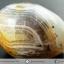 เดนไดทริก อาเกต Dendritic Agateขัดมันจากมาดากัสการ์ (69g) thumbnail 6