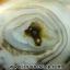 เดนไดทริก อาเกต Dendritic Agateขัดมันจากมาดากัสการ์ (52g) thumbnail 9
