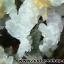 กลุ่มแร่แอนไฮไดรท์ (Anhydrite with Quartz on Calcite) (4.2kg) thumbnail 30