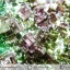 บิสมัท Bismuth รูปแบบแร่ที่มนุษย์ทำขึ้น(149g) thumbnail 12