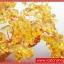 ▽ต้มไม้มงคลซิทริน Citrine เหรียญจีนทอง (size L) thumbnail 11