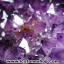 ▽โพรงอเมทิสต์ ( Amethyst Geode) ตั้งโต๊ะ (17.66KG) thumbnail 13