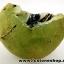 ▽พรีไนท์ (Prehnite)ธรรมชาติ ประเทศมาลี (20.4g) thumbnail 2