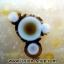 เดนไดทริก อาเกต Dendritic Agate ขนาดใหญ่ขัดมันจากมาดากัสการ์ (368g) thumbnail 1