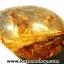 ▽=โปรโมชั่น= พลอยไหมทอง Golden Rutilated Quartz (15ct.) thumbnail 3