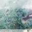 หินทรงพีระมิค- มอสอาเกต Moss Agate (148g) thumbnail 9