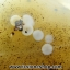 เดนไดทริก อาเกต Dendritic Agate ขนาดใหญ่ขัดมันจากมาดากัสการ์ (368g) thumbnail 15