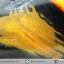 เดนไดทริก อาเกต Dendritic Agateขัดมันจากมาดากัสการ์ (47g) thumbnail 4