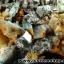 กลุ่มแร่แอนไฮไดรท์ (Anhydrite with Quartz on Calcite) (4.2kg) thumbnail 7