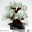 [โปรโมชั่น] ต้นไม้มงคล อเวนจูรีน Green Aventurine (สูง 32 cm) thumbnail 3