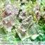 บิสมัท Bismuth รูปแบบแร่ที่มนุษย์ทำขึ้น(149g) thumbnail 4