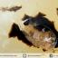 เดนไดทริก อาเกต Dendritic Agateขัดมันจากมาดากัสการ์ (55g) thumbnail 5