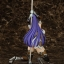 Taimanin Asagi 3 - Murasaki Yatsu Pole Dance Ver. 1/7 Complete Figure(Pre-order) thumbnail 7