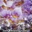 โพรงอเมทิสต์-คาค็อกซิไนท์ ขนาดใหญ่ ร่ำรวย มั่งคั่ง เสริมบารมี ( Amethyst-Cacoxenite Geode) 194KG thumbnail 16