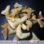 ชุดฟอสซิลฟันฉลามโบราณขนาดเล็ก (บิ่นแตก) (5.0g) thumbnail 2