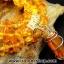 ▽สร้อยคอ อำพันบอลติกGenuine Baltic Amber (11g, 40 cm.) thumbnail 5