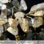 ต้นไม้มงคล หินไหมทอง ฐานควอตซ์สีน้ำนม ใช้เสริมฮวงจุ้ย โต๊ะทำงาน (1.3Kg) thumbnail 7