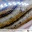 ▽อาเกตมาดากัสการ์ (Madagascar Agate) ขัดมัน (155g) thumbnail 8