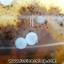 เดนไดทริก อาเกต Dendritic Agate ขนาดใหญ่ขัดมันจากมาดากัสการ์ (368g) thumbnail 12