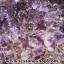 ▽โพรงอเมทิสต์ ซุปเปอร์เซเว่น (Geode Amethyst Super seven 7)39.8 KG thumbnail 10