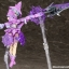 Megami Device - Chaos & Pretty Witch 1/1 Plastic Model(Pre-order) thumbnail 15