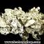 ▽ต้นไม้มงคล หินควอตซ์ใส (Clear Quartz) -ฐานควอตซ์ ใช้เสริมฮวงจุ้ย โต๊ะทำงาน (122g) thumbnail 6