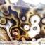 ▽อาเกตมาดากัสการ์ (Madagascar Agate) ขัดมัน (165g) thumbnail 5