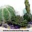 ▽สวนหินตั้งโต๊ะ (Green Aventurine, Howlite , Amethyst, Citrine, Quartz) thumbnail 1
