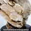 หินกุหลาบทะเลทราย (Desert Roses Stone) (2.1Kg) thumbnail 4