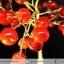 ต้นไม้มงคล หินคาร์เนเลี่ยน-ฐานควอตซ์ ใช้เสริมฮวงจุ้ย โต๊ะทำงาน (159g) thumbnail 3