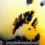 เดนไดทริก อาเกต Dendritic Agateขัดมันจากมาดากัสการ์ (149g) thumbnail 5