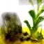 ▽สวนหินในขวดแก้ว ไม่ต้องรดน้ำ (ไพไรต์+ต้นถุงเงิน ถุงทอง) thumbnail 4