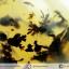 เดนไดทริก อาเกต Dendritic Agateขัดมันจากมาดากัสการ์ (46g) thumbnail 1