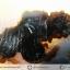 เดนไดทริก อาเกต Dendritic Agateขัดมันจากมาดากัสการ์ (45g) thumbnail 3