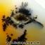 เดนไดทริก อาเกต Dendritic Agateขัดมันจากมาดากัสการ์ (149g) thumbnail 2