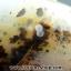 เดนไดทริก อาเกต Dendritic Agate ขนาดใหญ่ขัดมันจากมาดากัสการ์ (368g) thumbnail 9