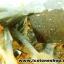 กลุ่มแร่แอนไฮไดรท์ (Anhydrite with Quartz on Calcite) (4.2kg) thumbnail 19