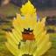 Dracap Memorial 02 Dragon Ball Super - Super Saiyan Son Goku Complete Figure(Pre-order) thumbnail 4