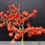ต้นไม้มงคล หินคาร์เนเลี่ยน-ฐานควอตซ์ ใช้เสริมฮวงจุ้ย โต๊ะทำงาน (159g) thumbnail 2