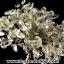 ▽ต้นไม้มงคล หินควอตซ์ใส (Clear Quartz) -ฐานควอตซ์ ใช้เสริมฮวงจุ้ย โต๊ะทำงาน (330g) thumbnail 8