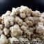 รังพระธาตุพระสีวลี ประเทศลาว-งานบุญ (929g) thumbnail 5