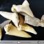 ชุดฟอสซิลฟันฉลามโบราณขนาดเล็ก (บิ่นแตก) (5.0g) thumbnail 3