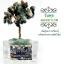 [โปรโมชั่น]*ต้นไม้หินมงคล หินแท้ ตั้งโต๊ะ ขนาดย่อม เสริมฮวงจุ้ย โปรโมชั่นต้นละ 500 บาท 3 ต้นแถม 1 ต้น thumbnail 11