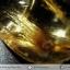 =โปรโมชั่น= พลอยไหมทอง Golden Rutilated Quartz (25.20ct.) thumbnail 4