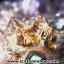▽โพรงอเมทิสต์ คาค็อกซิไนท์ (Cacoxenite in Amethyst ) 20.3 KG thumbnail 6