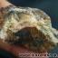 แร่โมนาไซท์ (Monazite) , แร่หายากจาก USA (44g) thumbnail 4